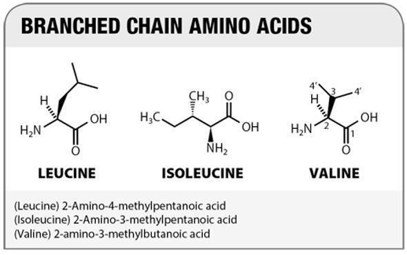 branched chain amino acids leucine isoleucine and valine structures