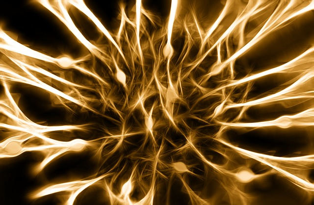 network of nerves or neurons